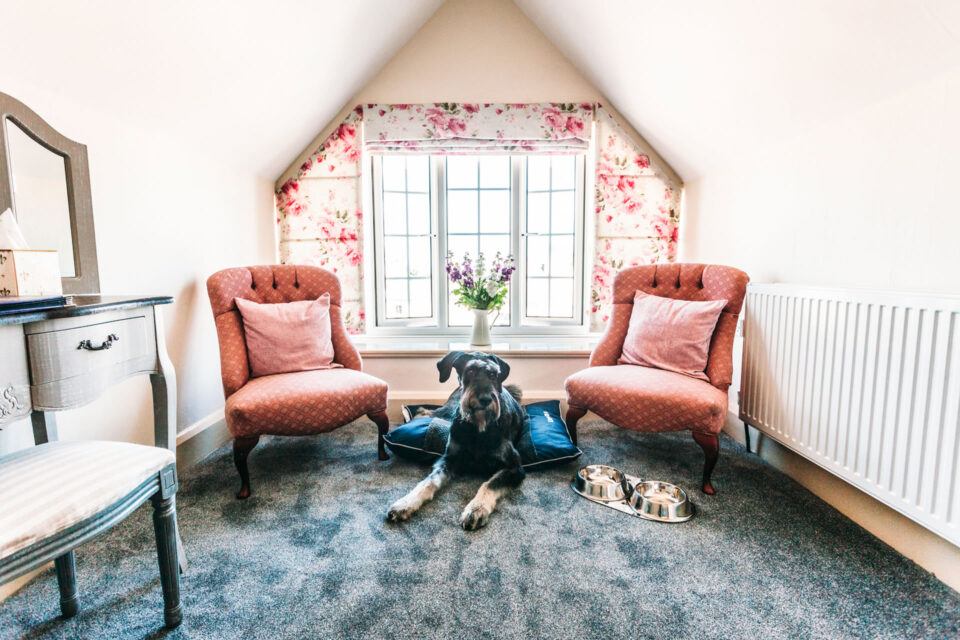 colwall dog friendly room